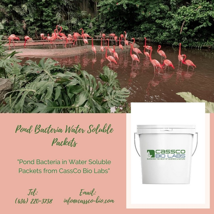 Pond Bacteria Water Soluble Packets